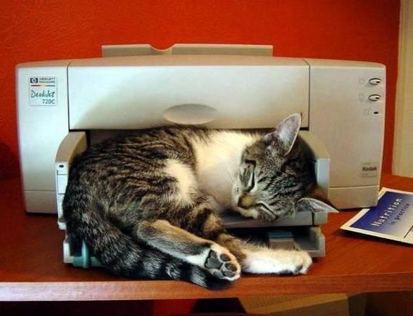 fits_i_sits_cats_01
