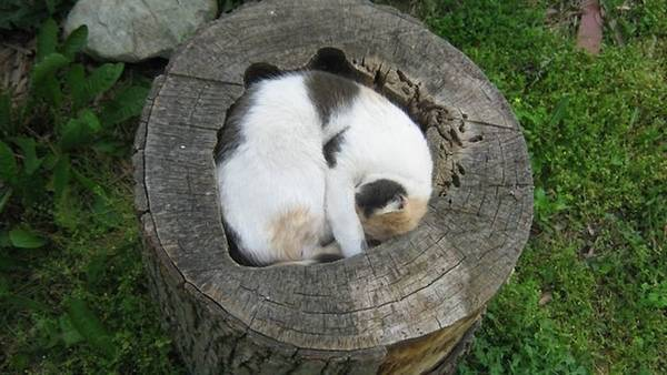 fits_i_sits_cats_04