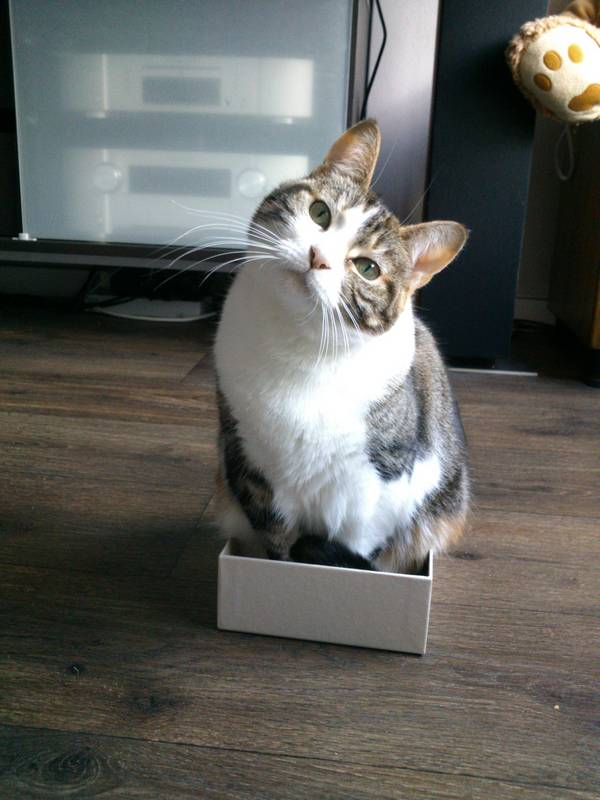 fits_i_sits_cats_05