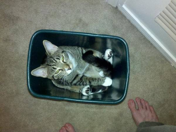 fits_i_sits_cats_07
