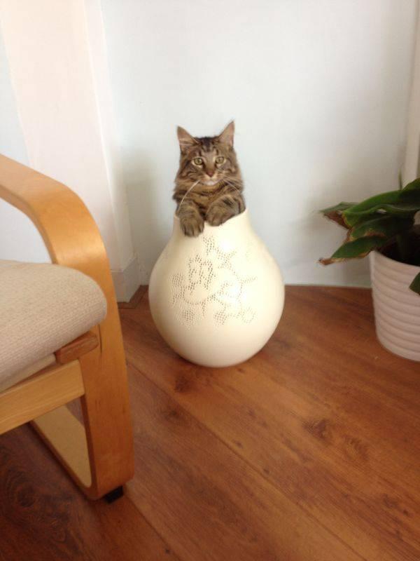 fits_i_sits_cats_09