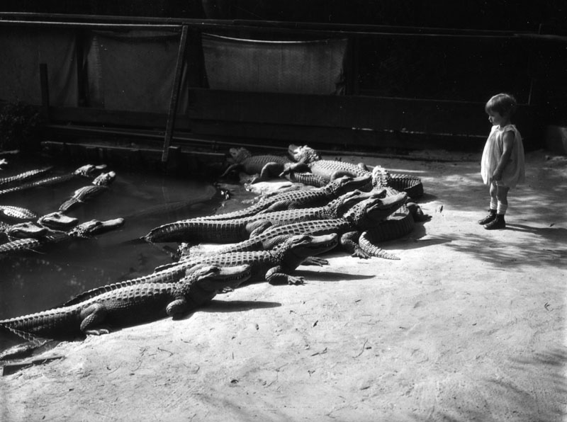 alligator_farm_01