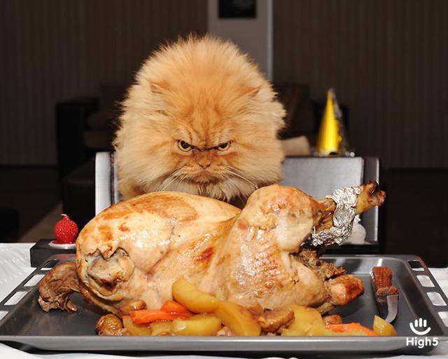 Grumpy Cat1