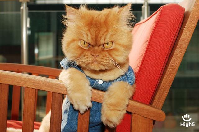 Grumpy Cat10