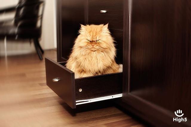 Grumpy Cat11