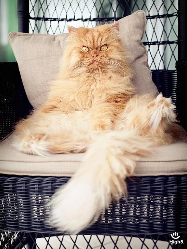 Grumpy Cat12