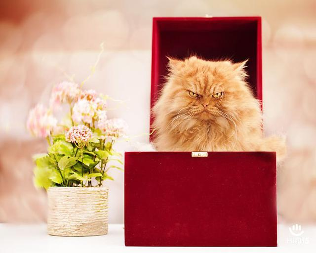 Grumpy Cat13