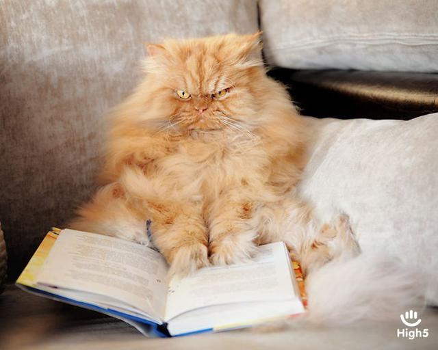 Grumpy Cat14