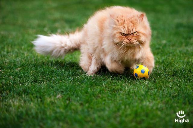 Grumpy Cat15