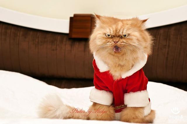 Grumpy Cat16