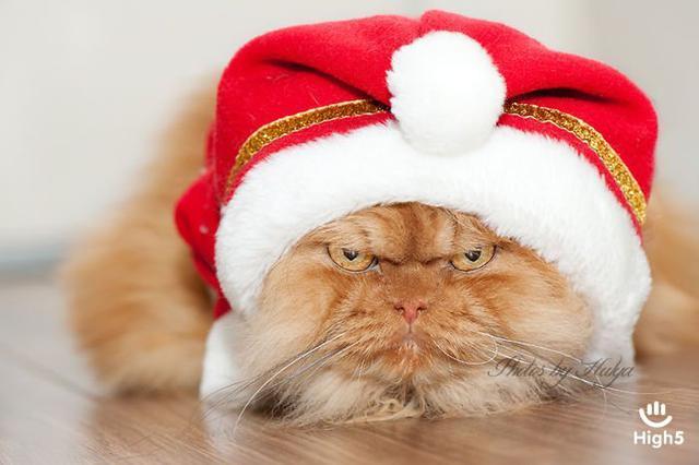 Grumpy Cat17
