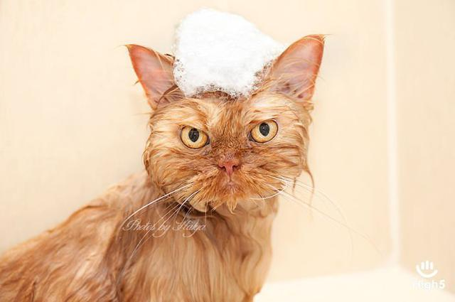 Grumpy Cat18