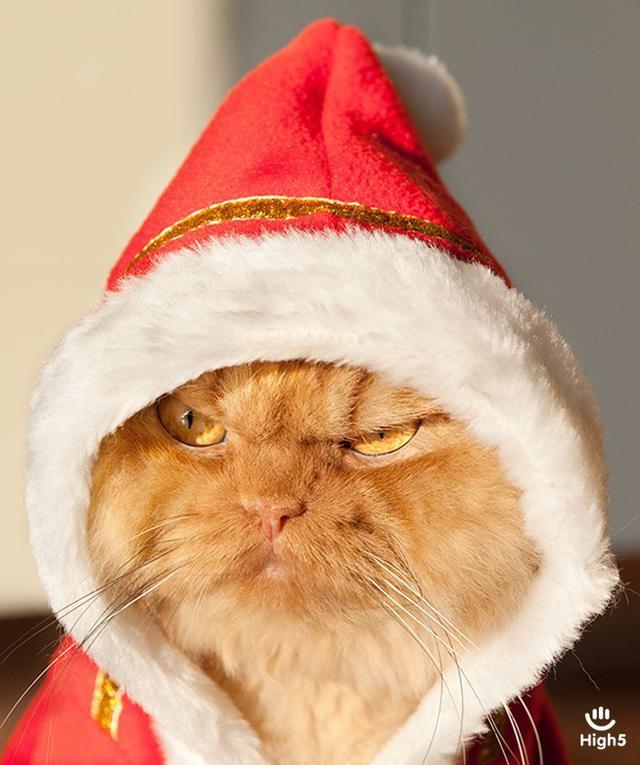 Grumpy Cat6