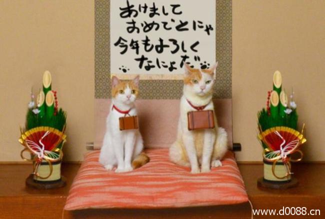 twocat2